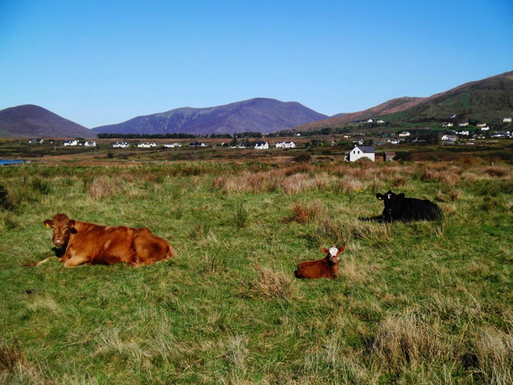 Ferienhaus, Kerry, Irland, Patricks, Wiese vor dem Haus, Ferienhäuser mit Meerblick mieten in Irland - Cottages mit Seeblick mieten entlang des Ring of Kerry in Irland