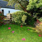 Ferienhaus, Kerry, Irland, Roads Cottage, Garten, Ferienhäuser mit Meerblick mieten in Irland - Cottages mit Seeblick mieten entlang des Ring of Kerry in Irland