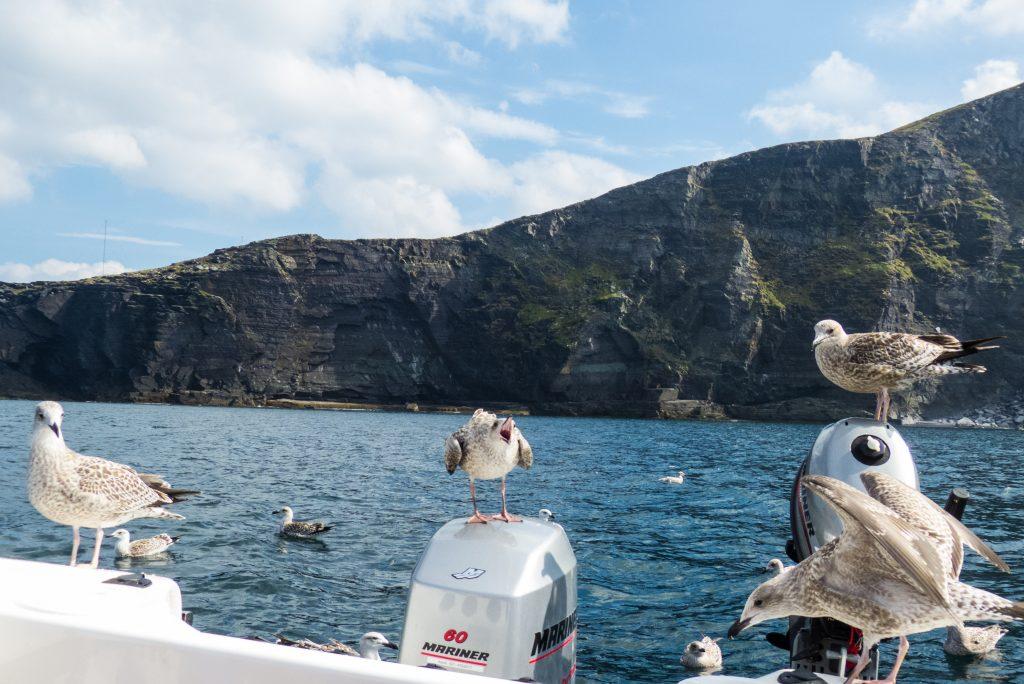 Ferienhäuser mit Meerblick mieten in Irland - Cottages mit Seeblick mieten entlang des Ring of Kerry in Irland