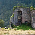 Die Schlossruine vor dem Ferienhaus Castle View in Glenbeigh in Kerry, Irland.